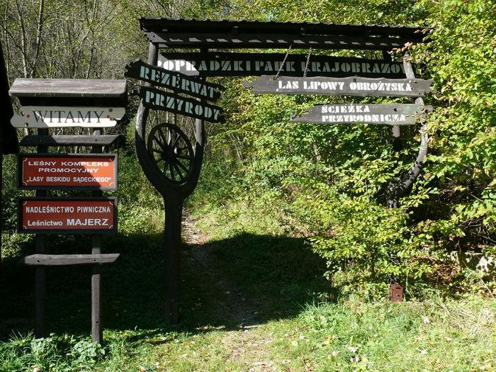 Las Lipowy Obrożyska w Muszynie